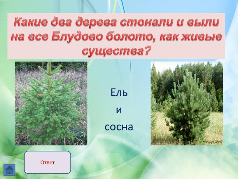 Ель и сосна Какие два дерева стонали и выли на все