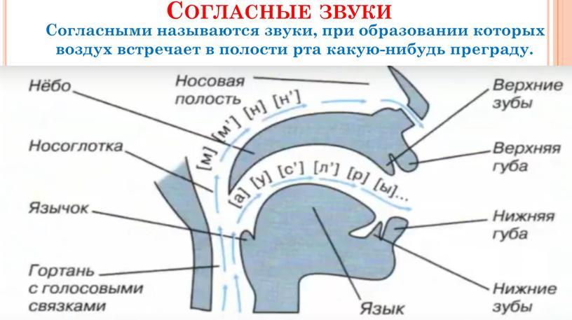 Согласные звуки Согласными называются звуки, при образовании которых воздух встречает в полости рта какую-нибудь преграду