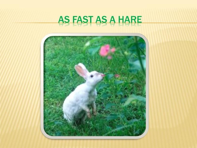 As fast as a hare