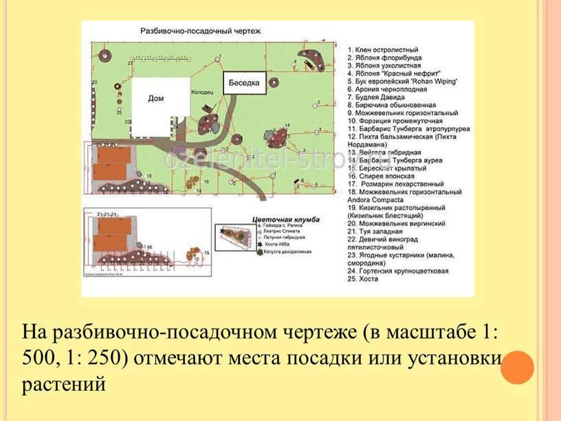 На разбивочно-посадочном чертеже (в масштабе 1: 500, 1: 250) отмечают места посадки или установки растений