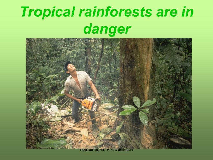 Н.А.Федкевич Tropical rainforests are in danger