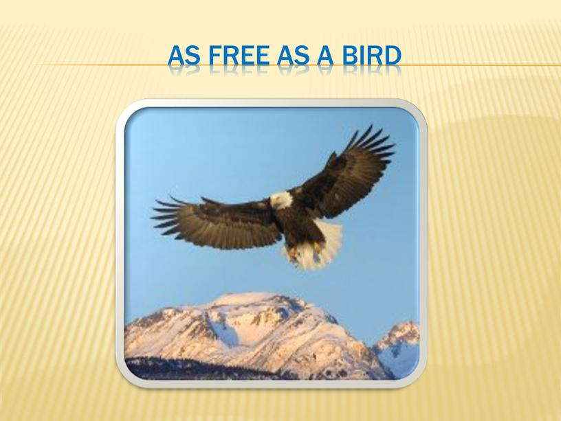 As free as a bird