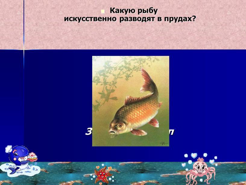 Какую рыбу искусственно разводят в прудах?