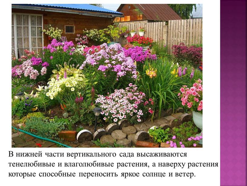 В нижней части вертикального сада высаживаются тенелюбивые и влаголюбивые растения, а наверху растения которые способные переносить яркое солнце и ветер