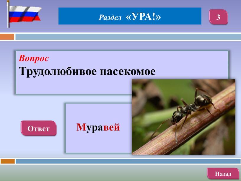 Вопрос Трудолюбивое насекомое
