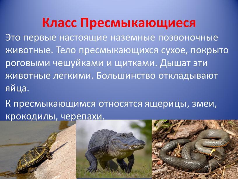 Класс Пресмыкающиеся Это первые настоящие наземные позвоночные животные
