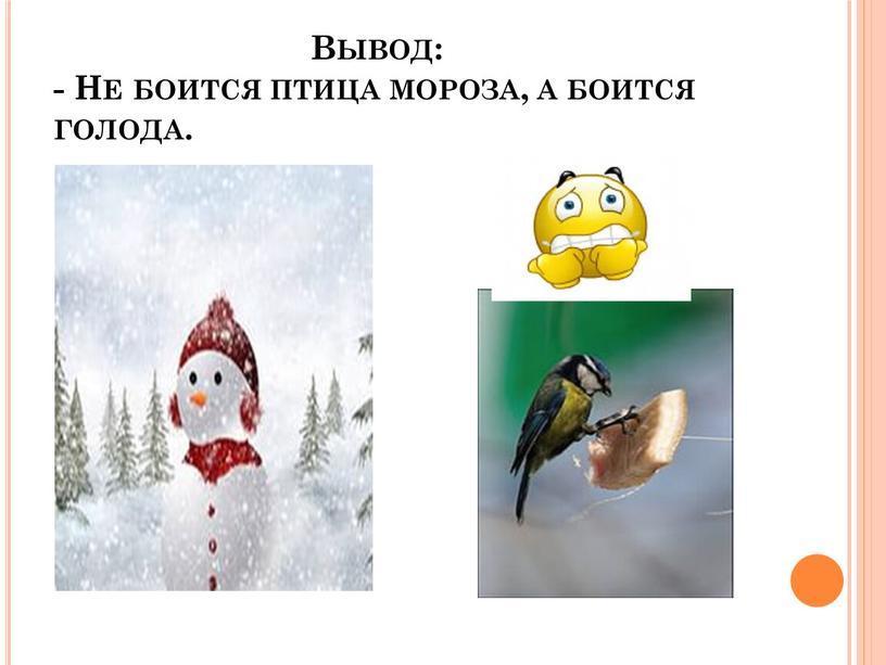 Вывод: - Не боится птица мороза, а боится голода