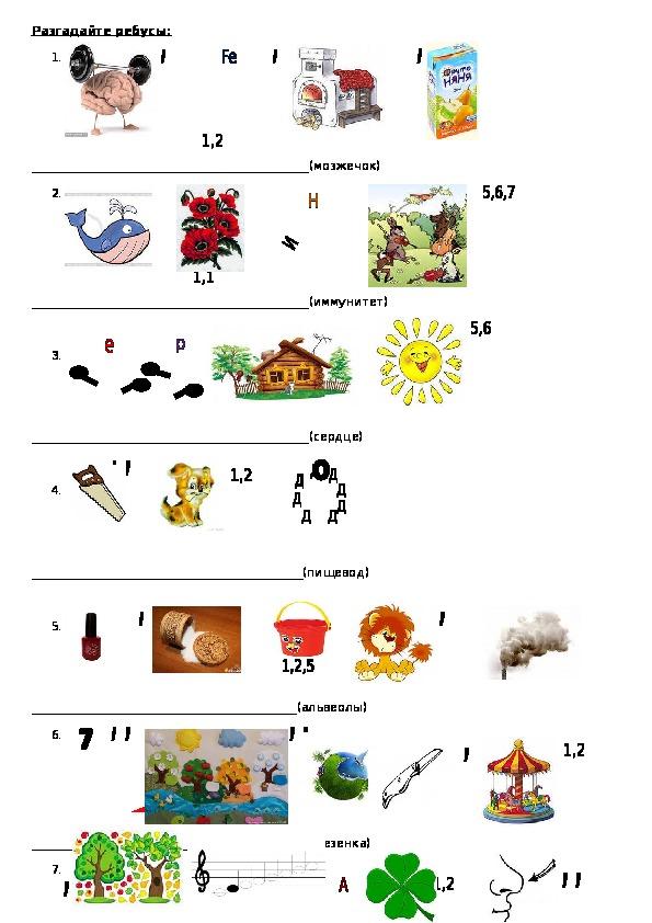 Игра Десяточка по биологии 8 класс