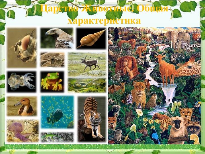 Конспект урока биологии 7 класс.Царство животные.Общая характеристика.