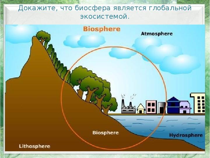"Презентация по биологии:""Учение о биосфере"""