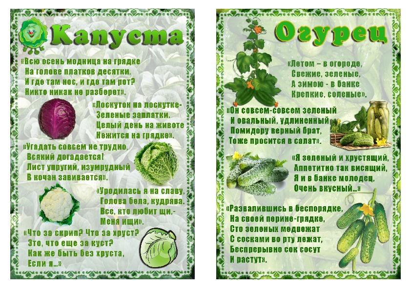 Стихи про овощи