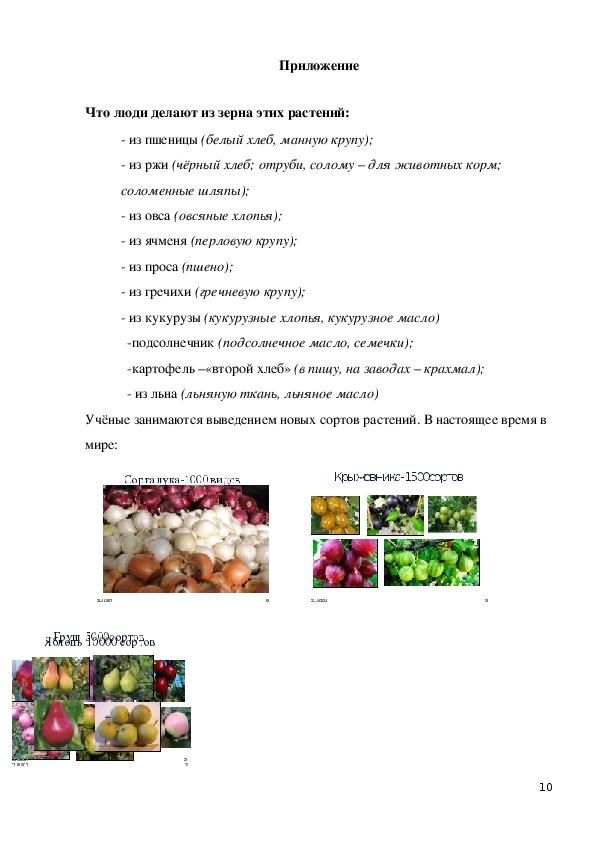 """Конспект урока по окружающему миру на тему """"Растениеводство в нашем крае"""" (4класс, окружающий мир)"""