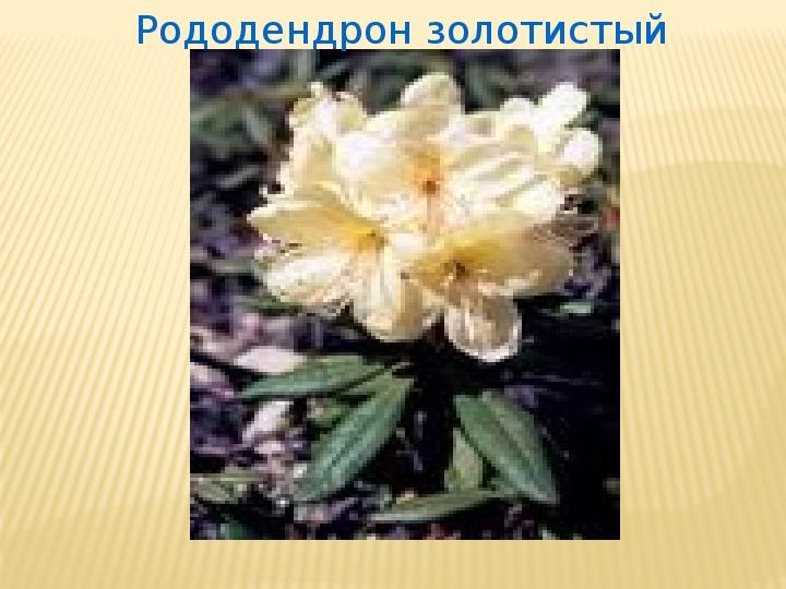 Лекарственные растения Тофаларии - разработка урока