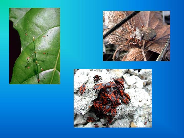 Презентация.Кто такие насекомые? Окружающий мир 1 класс