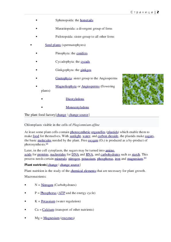 Review of information for kids about Plants