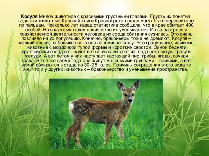 смотреть картинки животных из красной книги красноярского края дойдет готовности