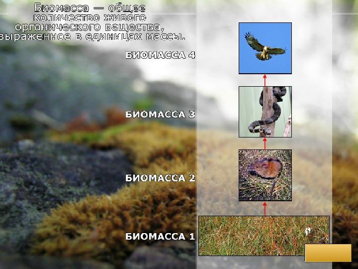 """Презентация по биологии """"Биогеоценоз и биоценоз"""""""