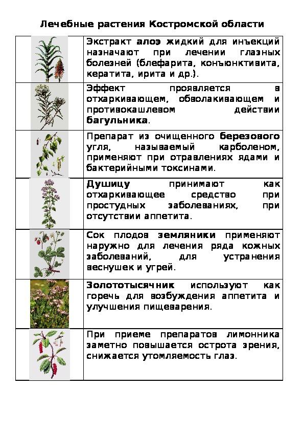 Лечебные растения Костромской области