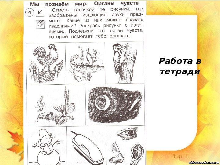 """Презентации по окружающему миру """"Мы познаём мир"""" (1 класс)"""