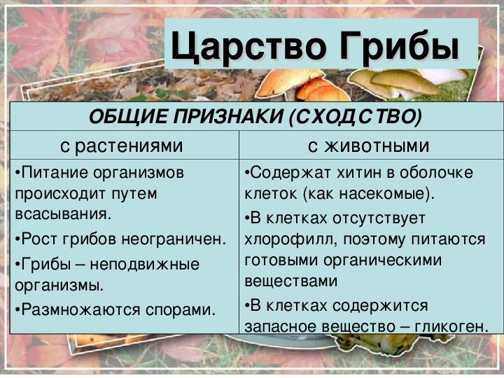 "Презентация на тему: ""Царство Грибов""."