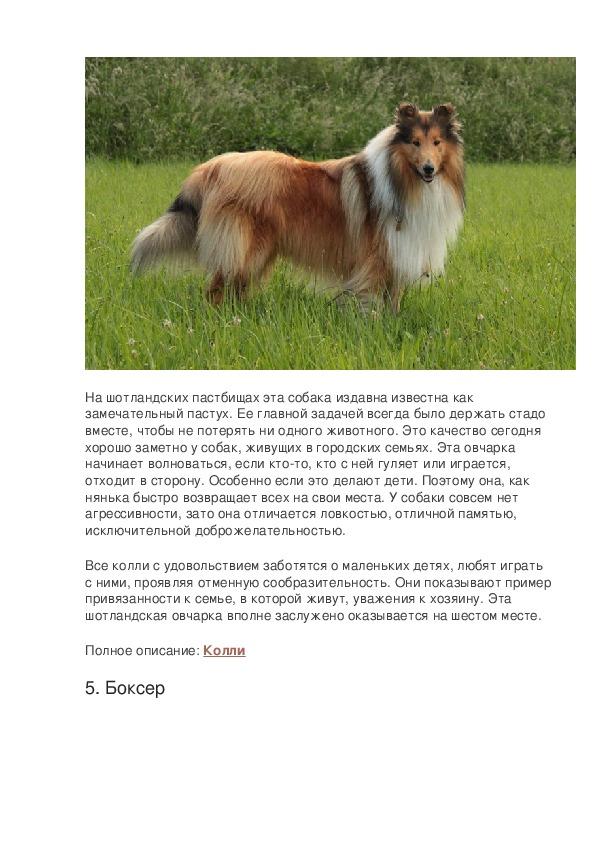 Самые добрые породы собак