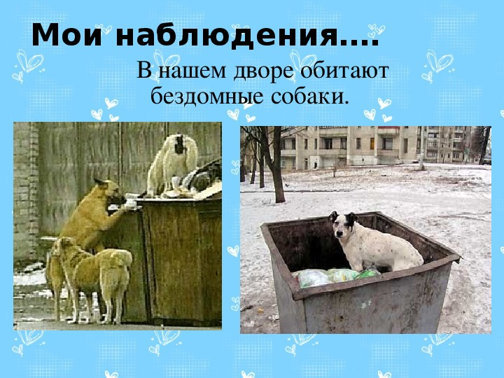 """Исследовательская работа. """"Приют помощи бездомным животным                «Верный друг» с. Началово"""