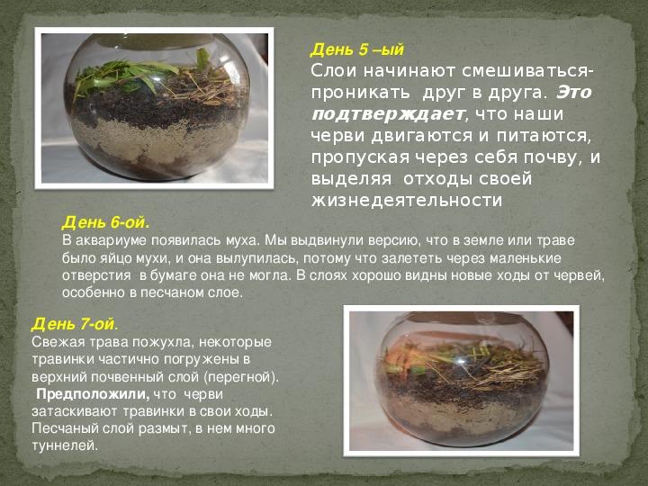 """Презентация исследовательской работы на тему """"Изучение среды обитания дождевых червей"""" ученика 2 класса Абросимова Павла"""