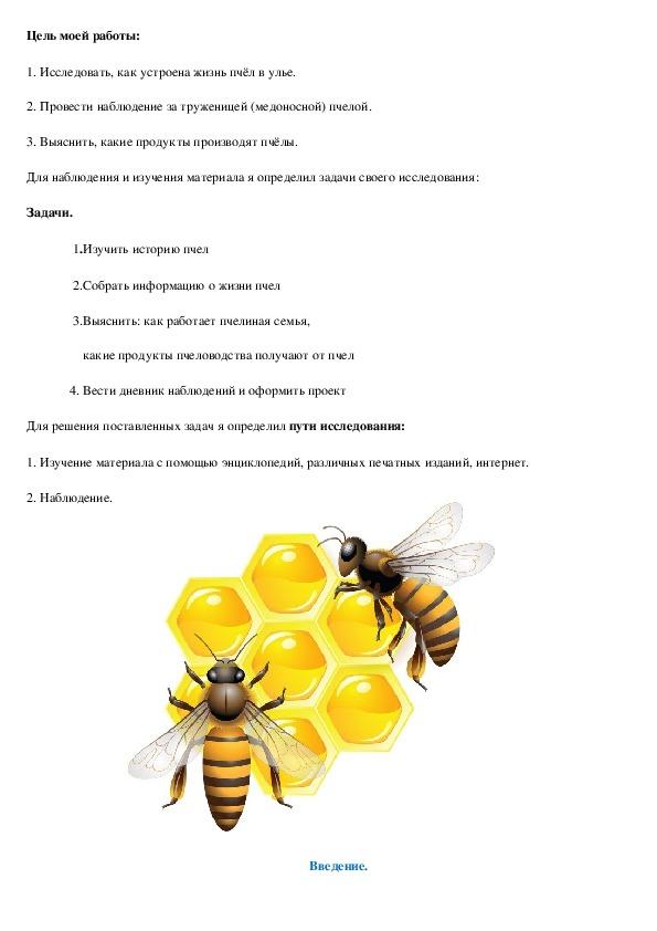 Исследовательская работа на тему: «Удивительный мир пчел»