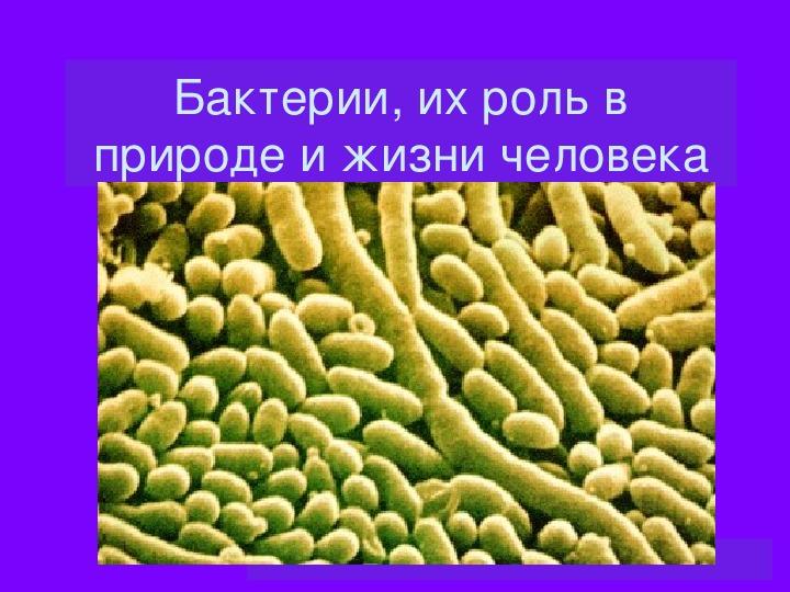 Бактерии 5 класс