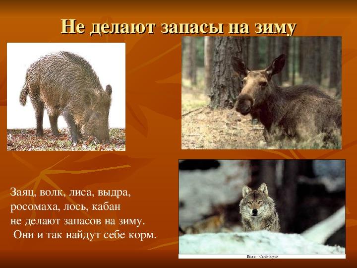 """Презентация по окружающему миру на тему """"Как животные готовятся к зиме"""" для 2 класса"""