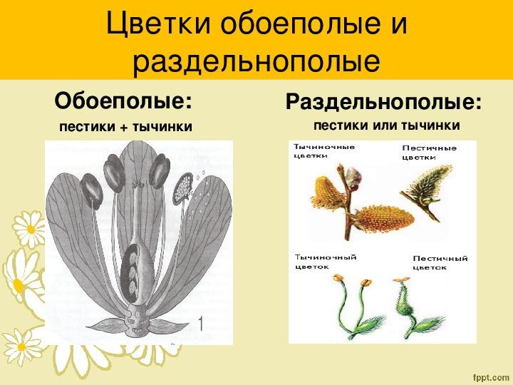 "Презентация по биологии на тему ""Строение цветка"" (6 класс)"