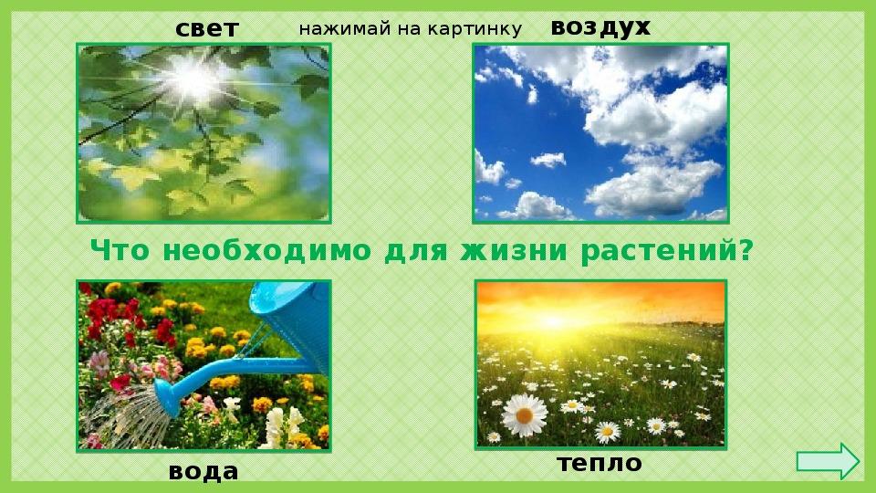 Что необходимо растениям для жизни картинка
