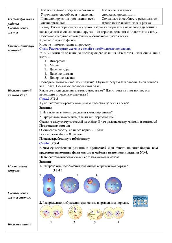 """Презентация к уроку """" Клеточный цикл, деление клетки. Митоз, мейоз"""" ( 10 класс профильный уровень)"""