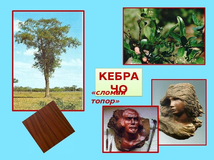"""Презентация по географии на тему: """"Растительность тропических лесов Южной Америки"""""""
