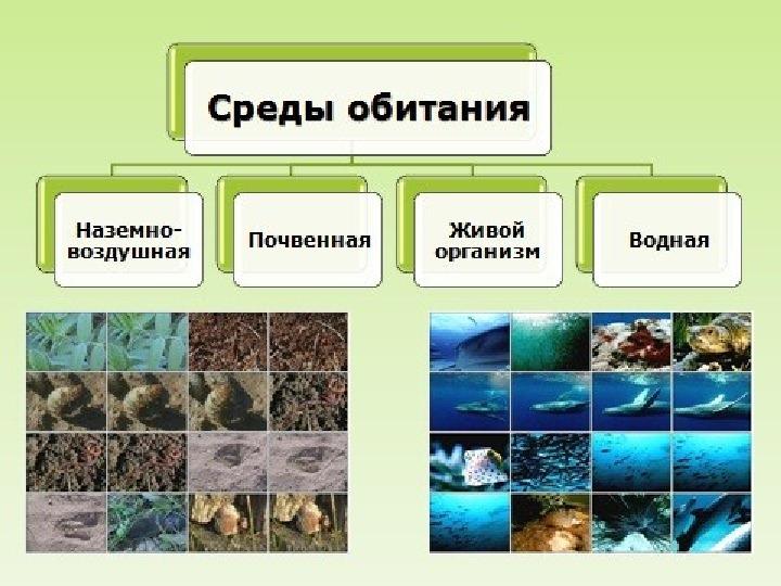 "Презентация к уроку ""Среда обитания"" 5 класс"