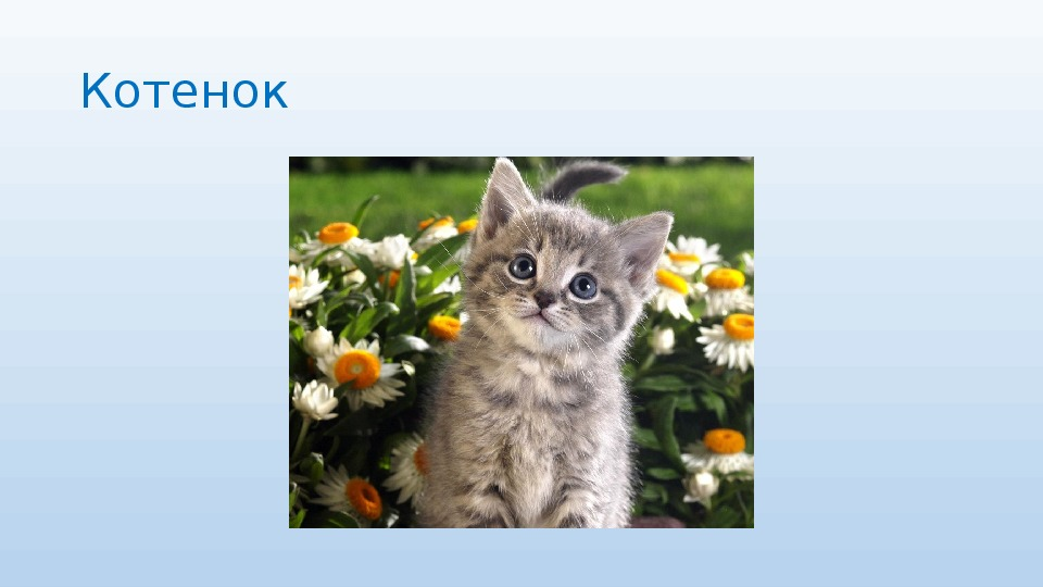 """Презентация на тему: """"Домашние животные и их детеныши"""""""