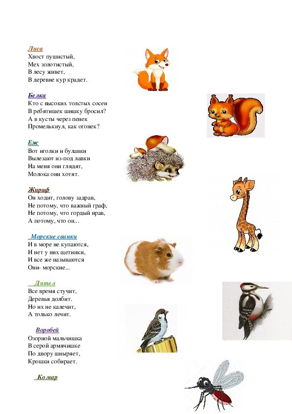 """Загадки для детей подготовительной группы """"Животный мир""""."""