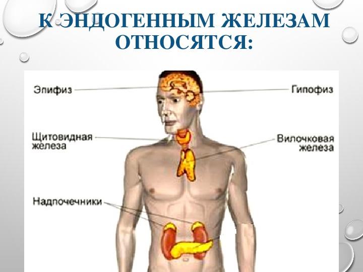"""Презентация к уроку """"Железы внешней,внутренней и смешанной секреции"""""""