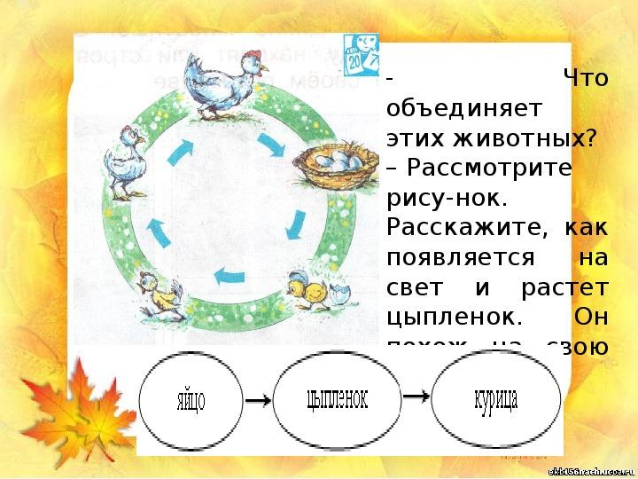 """Презентация """"Животные - часть природы"""" (1 класс, окружающий мир)"""