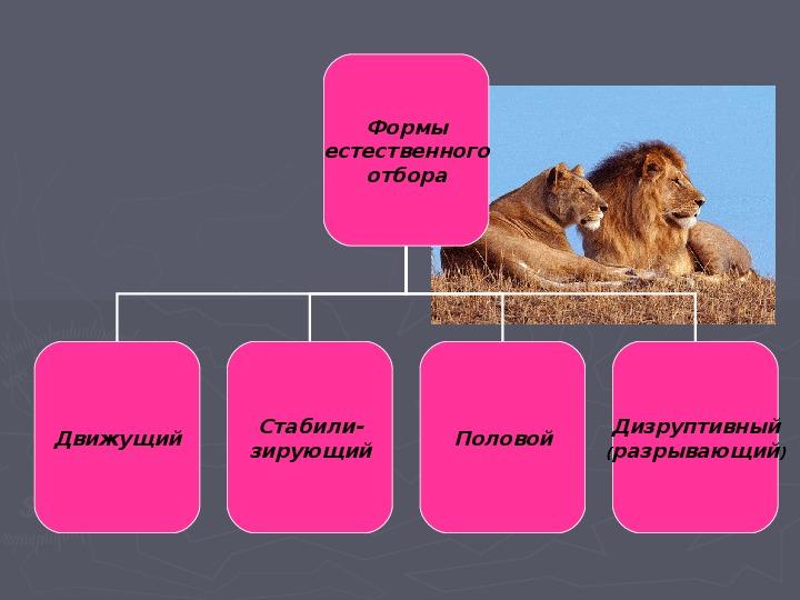 "Презентация по биологии  ""Учение Ч. Дарвина о естественном отборе"" 9 класс"