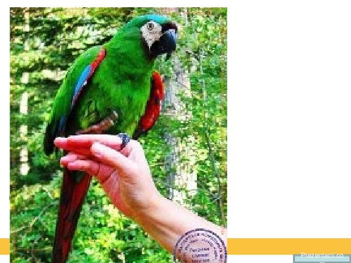 Конспект урока ИЗО  выполнение панно «Веселые попугайчики»