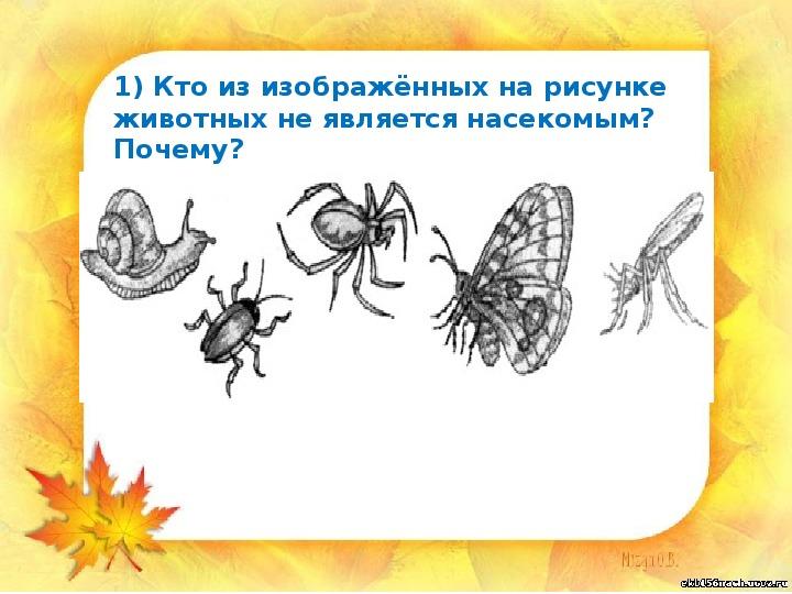"""Презентация """"Насекомые - часть живой природы"""" (1 класс, окружающий мир)"""