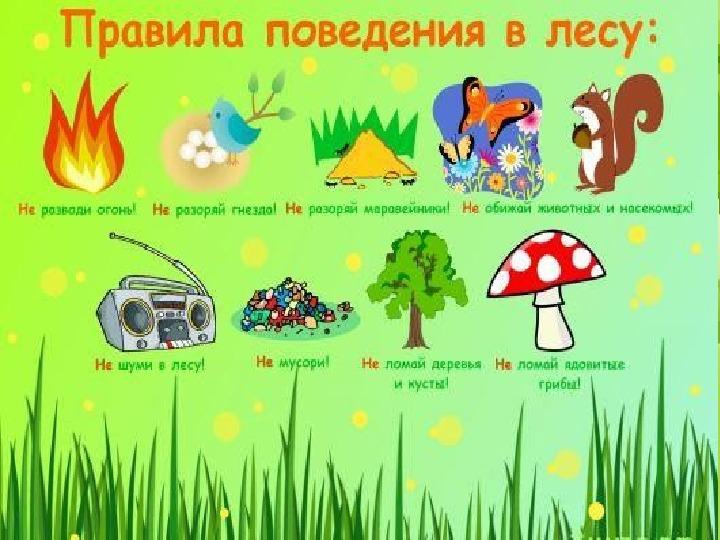 """Презентация по окружающему миру: """"Деревья леса"""" (2 класс)"""