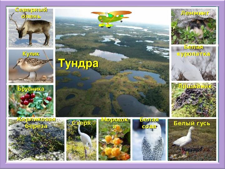открытка картинки животных и растений природных зон эти фото проекты