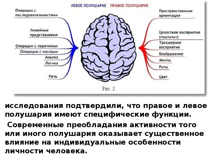 Функции полушарий головного мозга картинка