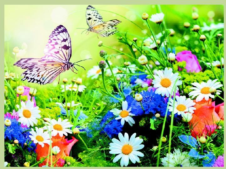 """Конспект НОД  """"Бабочки на лугу"""""""