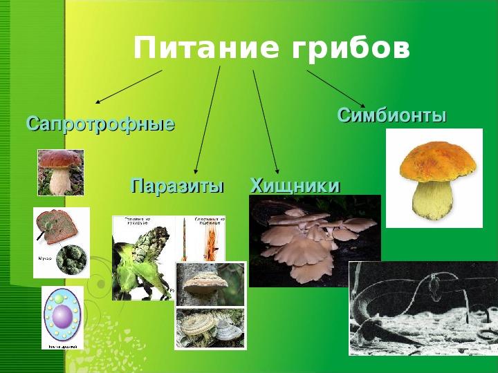 """Презентация по биологии на тему """"Общая характеристика царства грибов"""" (7 класс)"""