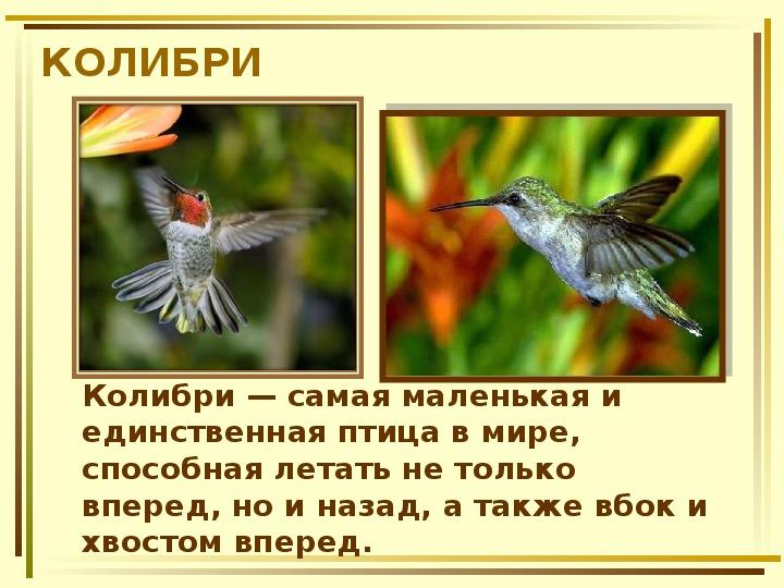 цифровые колибри описание птицы обзора узнаете