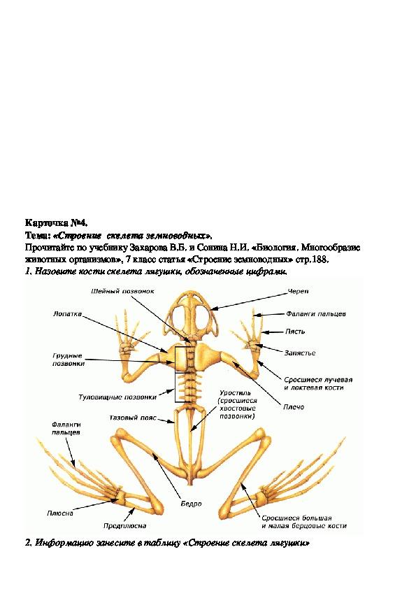 Конспект урока по биологии 7 класс. Класс Земноводные.
