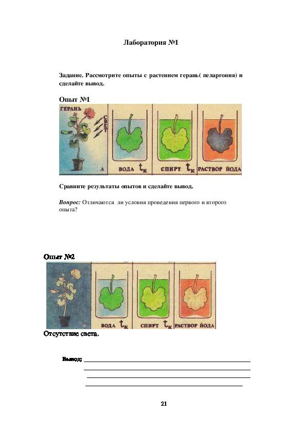 Урок  биологии в 6 классе тема: фотосинтез
